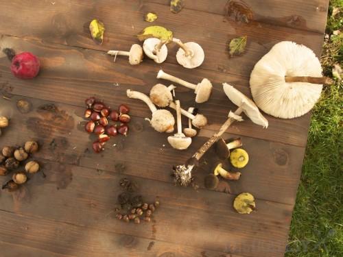 Jesenný úlovok - bedle, suchohríby, gaštany aj žalude