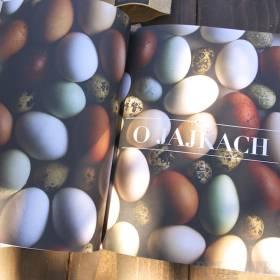 Usta - článok o vajíčkach