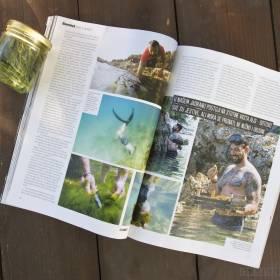 Článok o morských riasach